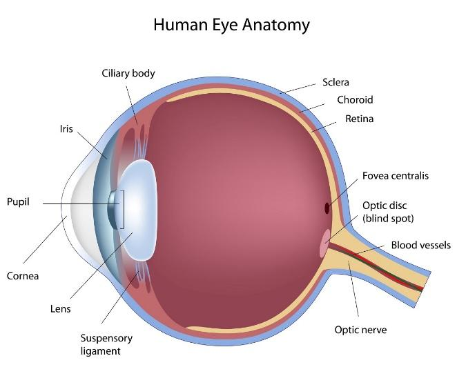 San Diego Eye Care Services